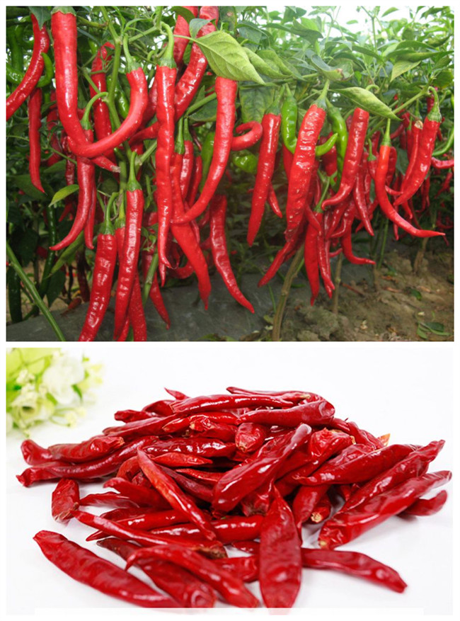 Tunnel Type Industrial Microwave Equipment For Red Pepper Food Drying